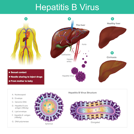 Viral structure of Hep B