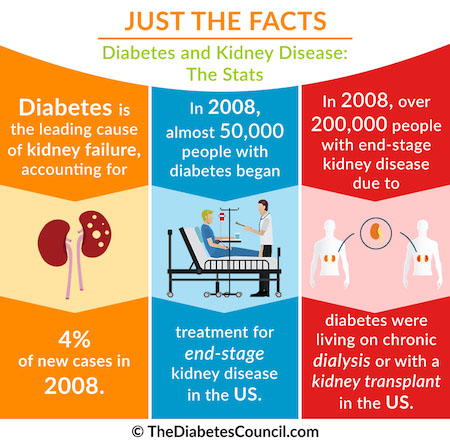 Kidney Health And Kidney Function Basics Health Testing Centers